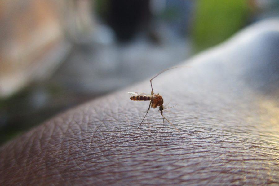 A alta da Dengue no Brasil.